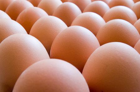 Forex egg